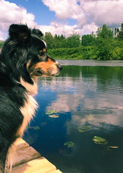 reglements chien Micro-Chalets des Appalaches